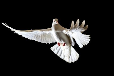 Símbolo De La Libertad Palomas Blancas Volando Sobre Un Fondo Negro