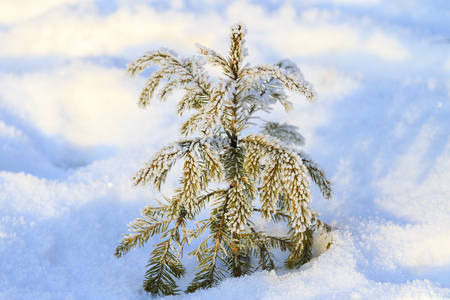 little Christmas tree that fell asleep in the snow , winter period Stock Photo