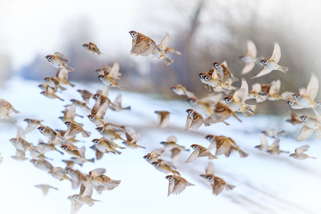 birds fly on a snowy day on a winter day , winter mood, love