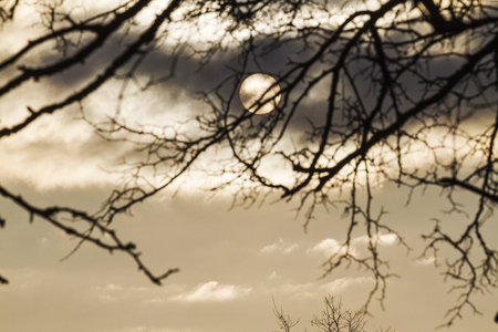 cold winter day in a stormy sky and silhouette of a tree , weather,
