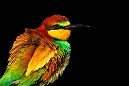 Spring colored bird isolated on black background Stock Photo