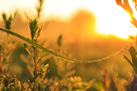 drops of dew on a blade of grass at sunrise, textures and wallpapers