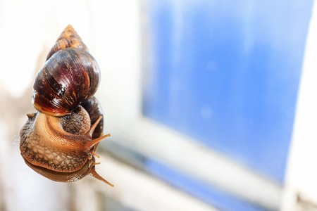 snail looks out the window Stock Photo