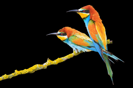 incredibly beautiful birds isolated on a white background