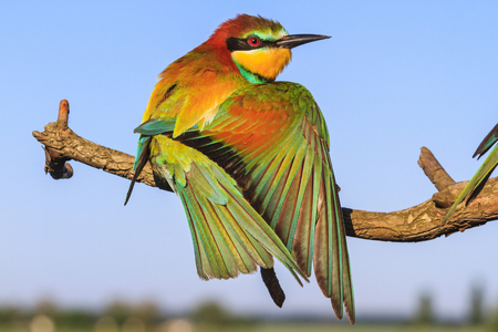 beautiful bird on a branch spreading wings, wildlife and changing seasons
