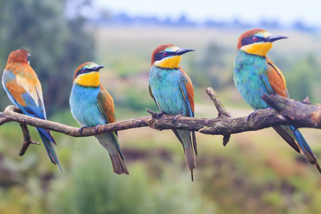 flock of colored birds on the branch looks one way , wildlife and beautiful colors