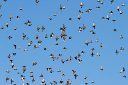 birds fly beautifully along the blue sky , seasonal specifics Stock Photo