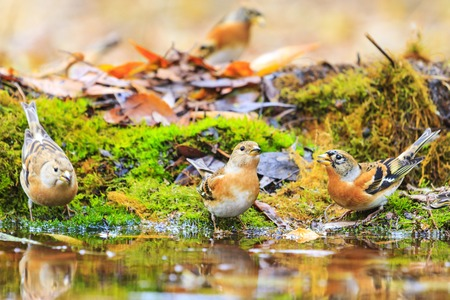 birds in autumn forest watering , wildlife in the autumn period