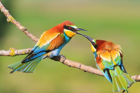 colored bird touching the beak Reklamní fotografie