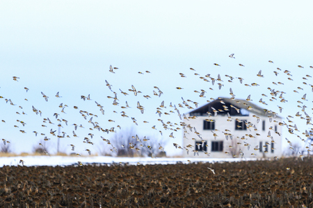 birds fly to the background of the house 版權商用圖片