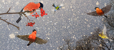 Christmas birds in a snowy beautiful sky