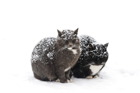 two cats sit powdered with snow