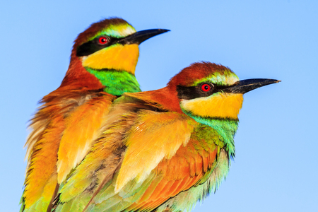 colored spring birds on the blue sky background, wild nature