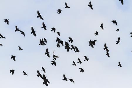 mystical birds fly through the sky