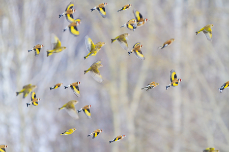 beautifully birds fly over the forest