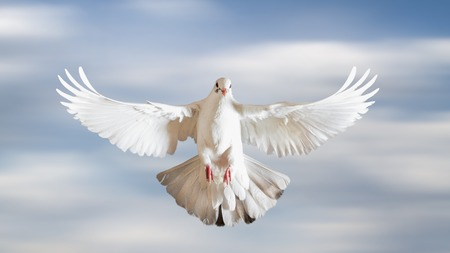sacred white dove spread its wings in the sky Banco de Imagens