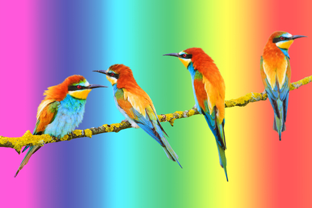 birds of paradise sit on the background of the rainbow background
