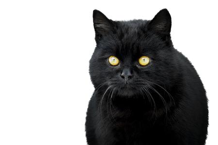 black cat on white background Imagens