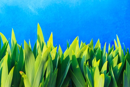 bright spring blue background and green sprouts flowers Stock Photo