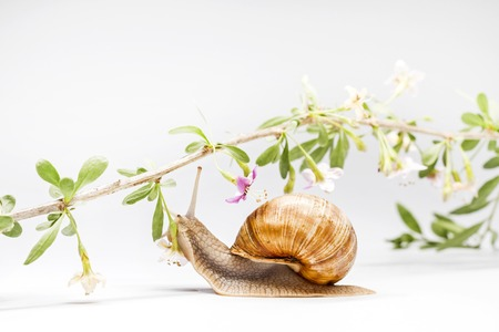 gentle touch of nature snail and goji flowers