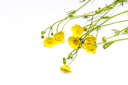 yellow delicate flowers on a white background