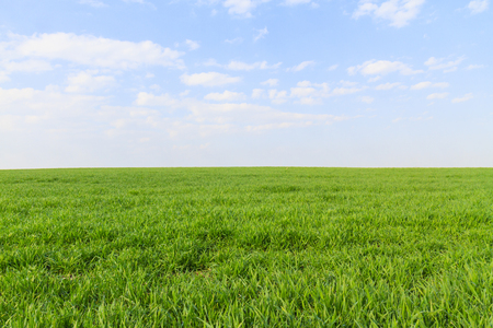 classic screensaver for computer, green field and blue sky