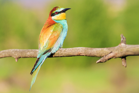 colorful beautiful bird sitting on a branch