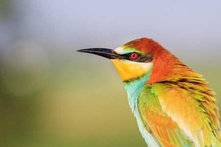 portrait of a beautiful colorful bird Imagens