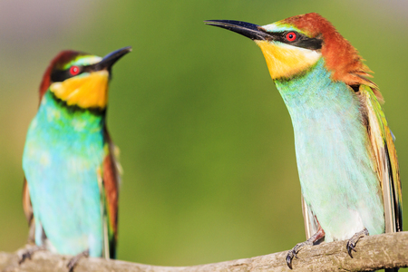 two beautiful colorful birds chatting against each other
