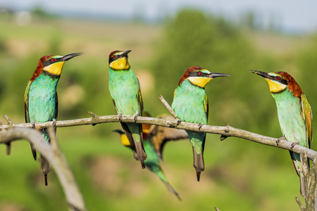 flock of wild colorful birds sitting on a branch