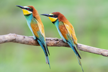 pair of wild colorful birds sitting on a branch Imagens