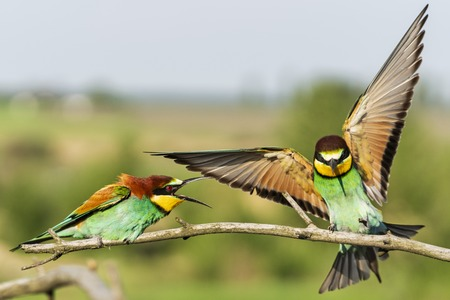 spring games of wild colorful birds