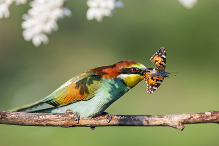 paradise colored bird and butterfly in its beak Imagens