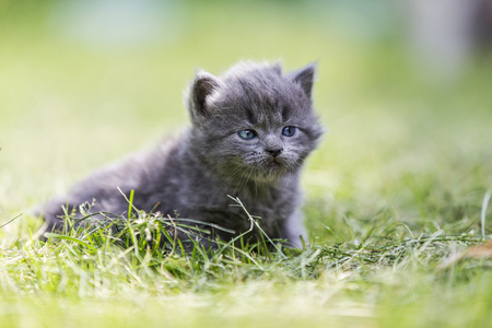 cute gray kitten among green grass Imagens