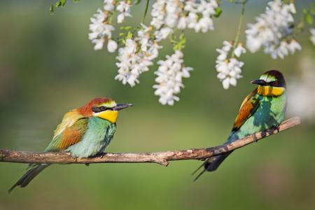 Paar schöne bunte Vögel sitzen in weißen Blumen Standard-Bild