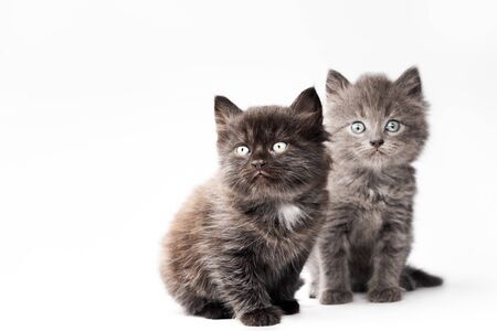 kittens on a white background look up Imagens