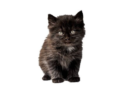 black kitten isolated on white background