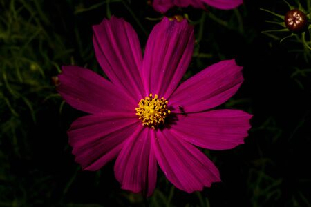 pink flower on a dark background