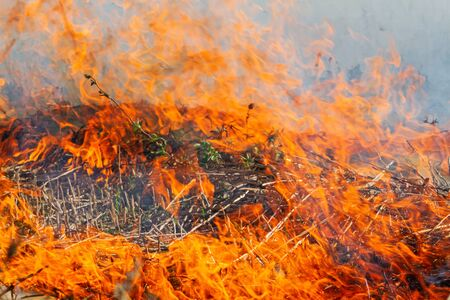 green plants die in wildfire, exclusive Reklamní fotografie