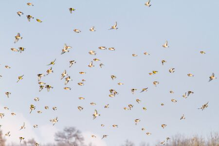 flock of beautiful birds flies through the sky, wild nature