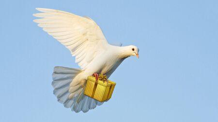 weiße Taube trägt ein Geschenk für das Fest
