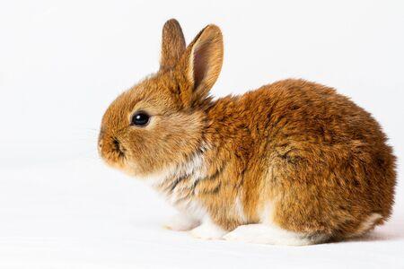 beautiful rabbit on a white background, holiday