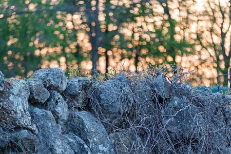 stone fence at sunset with beautiful bokeh, spring flowering