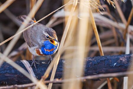 beautiful bird sings in the thicket , wildlife 스톡 콘텐츠