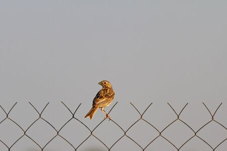 lonely bird sits on a fence, wildlife Imagens