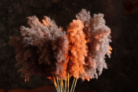 bouquet of cane stands in the house at sunset , exclusive