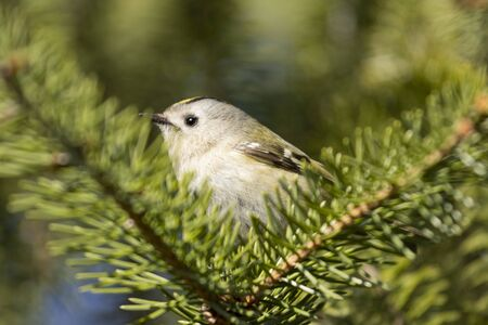 small wild bird among the V-shaped branch, wild nature