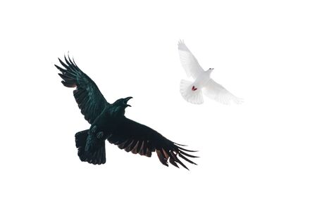 good and evil, black and white, black raven and white dove, life values