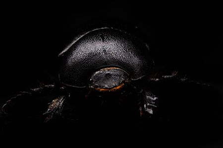 scarab close-up on a black background
