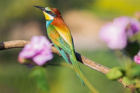 bee-eater sitting among beautiful flowers, wild nature